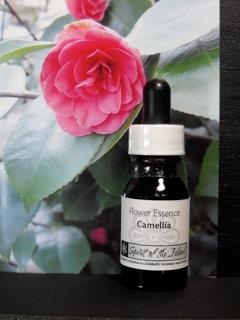 Camellia-Essence