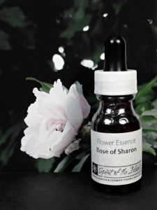 Rose-of-Sharon-Essence